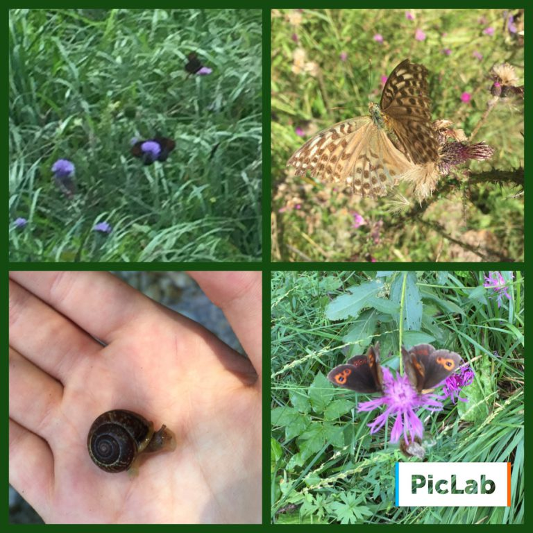 Farfalle e chiocciole in Val di Non