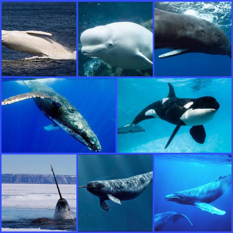 Balene… che passione!